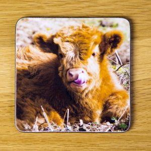 "Highland Cattle Calf ""Lick"" dc0002-3306"