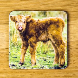 "Highland Cattle Calf Coaster ""Skinny"" dc0005-3304"