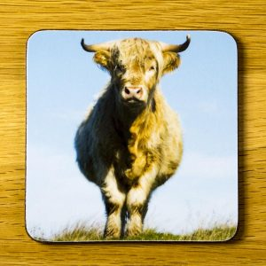 Blue Moo Coaster dc0006-3324