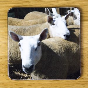 Orange Sheep Coaster dc0009-3322