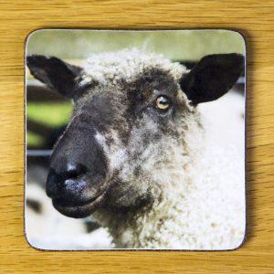 Mad Sheep Coaster dc0010-3305