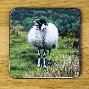 "Swaledale Sheep Coaster ""1111"" dc0014-3307"