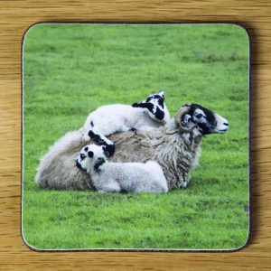 """Family Hugs"" Swaledale Sheep Coaster dc0015-3309"