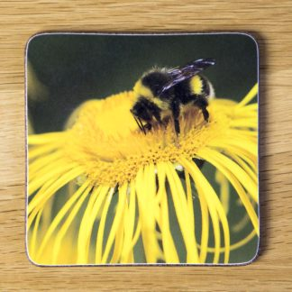 Bee on a Yellow Flower Coaster dc0017-3318