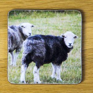 Two Herdwick Sheep Coaster dc0018-3320