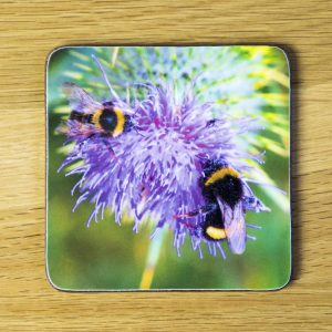 Two Bees on a Thistle Coaster dc0028-3316
