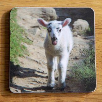 A Cheeky Lamb