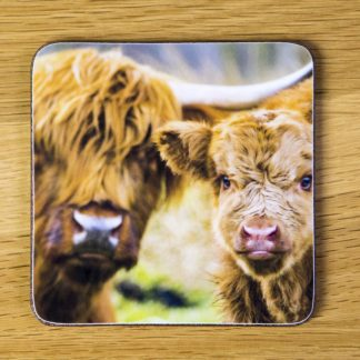 Highland Cattle and Calf Coaster dc0003-3321