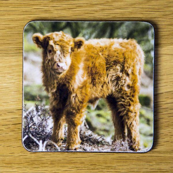 "Highland Cattle Calf Coaster ""Teddy"" dc0004-3319"
