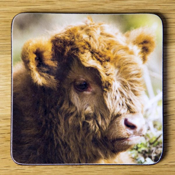 """Highland Cattle Calf Coaster """"Tired"""" dc0007-3314"""