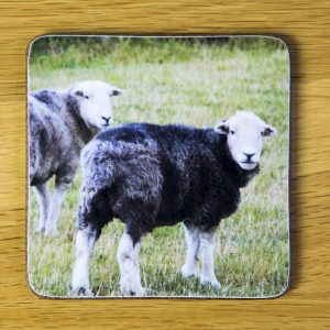 Two Herdwick Sheep Coaster dc0018-3320