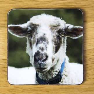 "Sheep Coaster ""Pumpkin"" dc0020-3323"