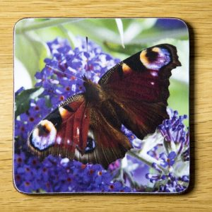 Peacock Butterfly on Buddleia Coaster dc0022-3327