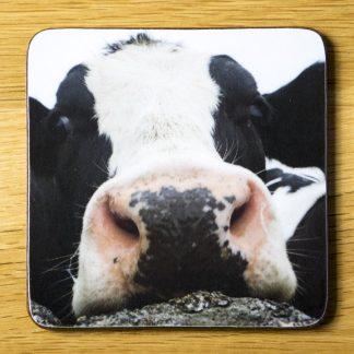 A Friendly Cow Nosin' Around Coaster dc0025-3325