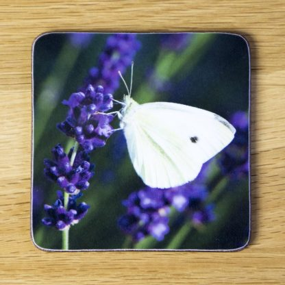 White Butterfly on Lavender Coaster dc0029-3317