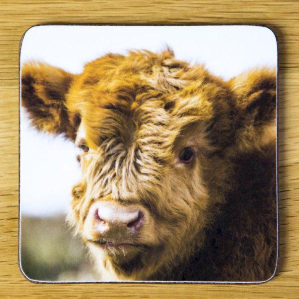 "Highland Cattle Calf ""Bubbles"" Coaster dc008-3308"