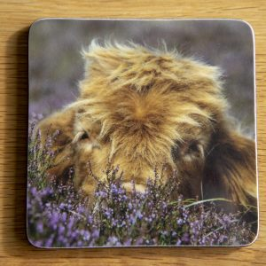 Highland Cow Hiding In Heather Coaster