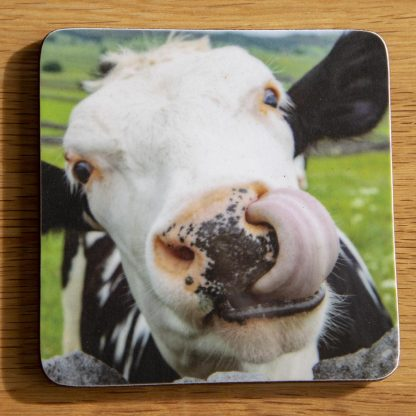 Cow Coaster Licking Nose